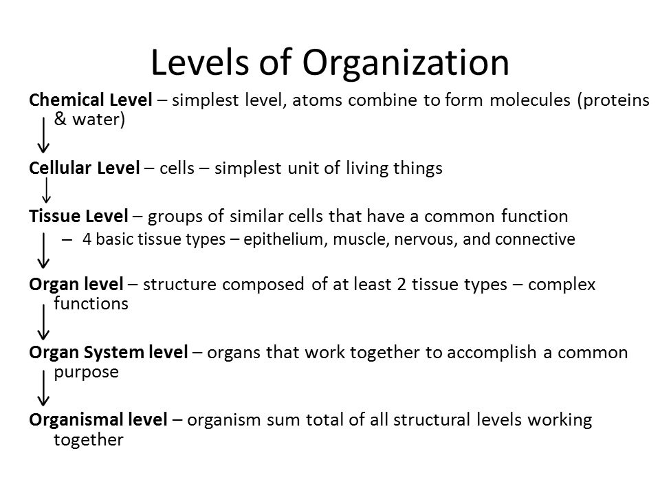 Levels of Organization Chemical Level – simplest level, atoms combine to form molecules (proteins & water) Cellular Level – cells – simplest unit of l