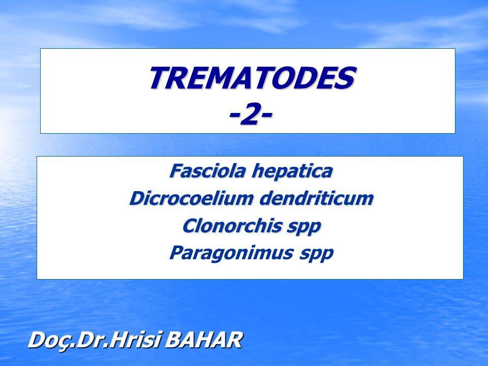 TREMATODES -2- Fasciola hepatica Dicrocoelium dendriticum Clonorchis spp Paragonimus spp Doç.Dr.Hrisi BAHAR