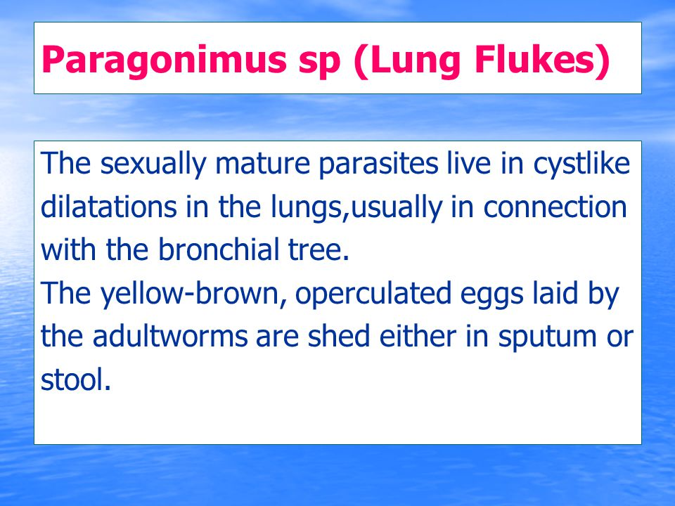 Paragonimus sp (Lung Flukes) The sexually mature parasites live in cystlike dilatations in the lungs,usually in connection with the bronchial tree. Th