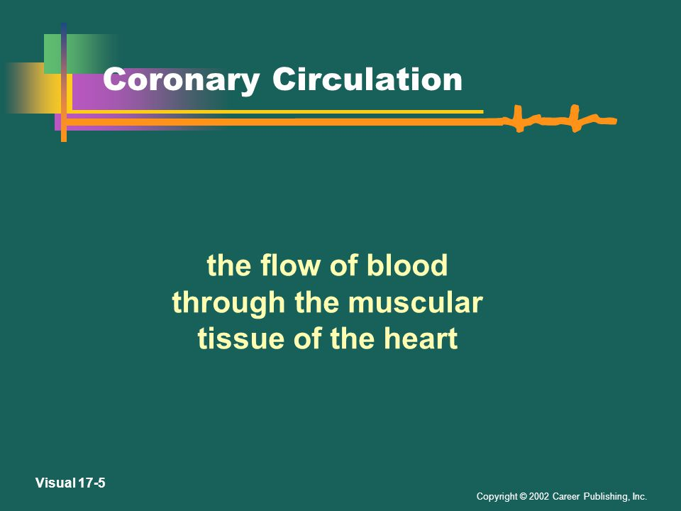 Copyright © 2002 Career Publishing, Inc. Visual 17-4 External Heart From LifeART, Super Anatomy 1.