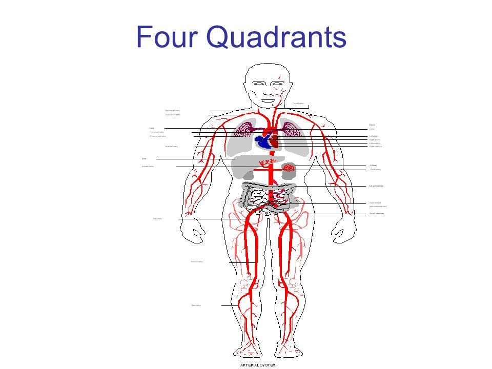 ANATOMY Four Quadrants 1.Upper right.