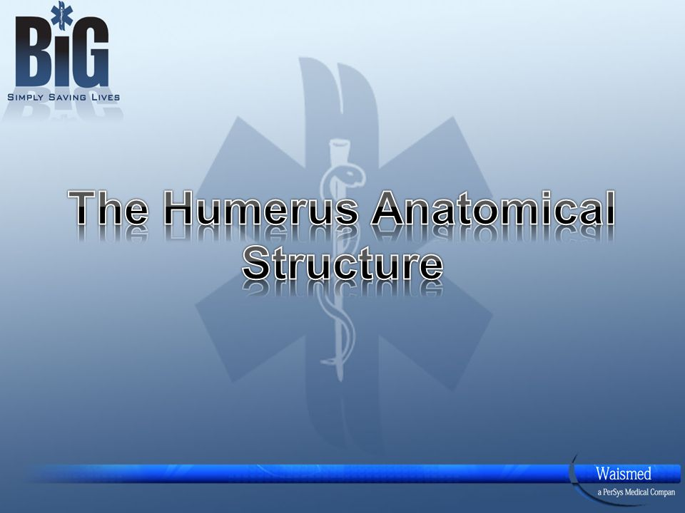 Humerus - Anatomy Long bone – The longest bone in the upper extremity.