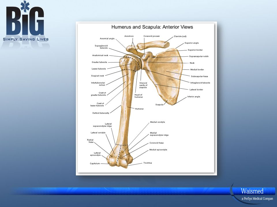Reminder: The shoulder should be Adducted.The palm of the hand should be placed on the Umbilicus.