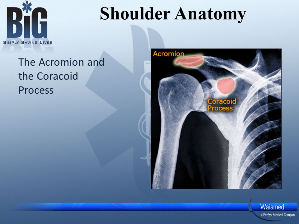 Draw an Imaginary line between these two points Shoulder Anatomy