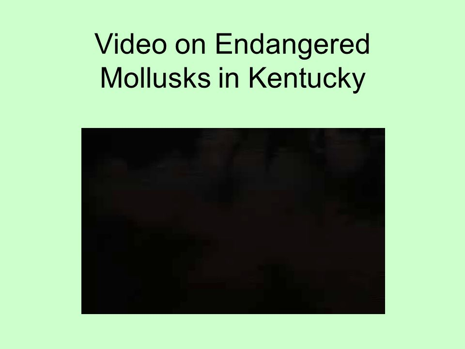 Video on Endangered Mollusks in Kentucky