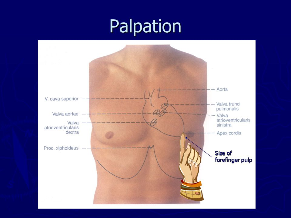 Palpation Size of forefinger pulp
