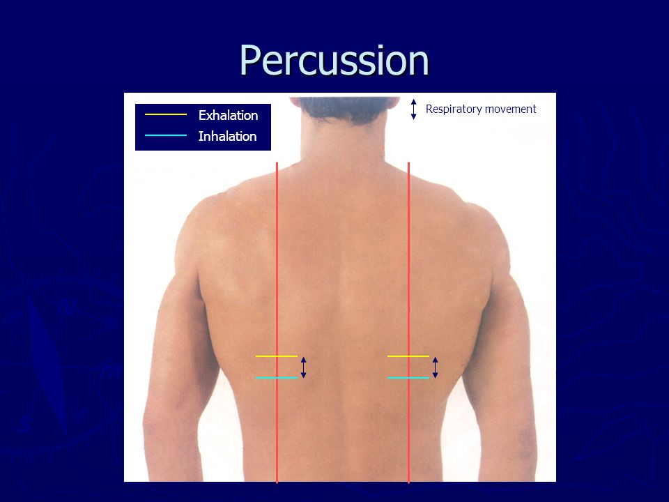 Percussion Respiratory movement Exhalation Inhalation