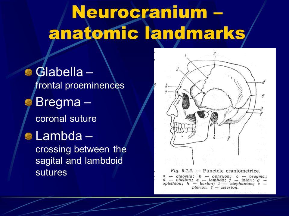 Neurocranium – anatomic landmarks Glabella – frontal proeminences Bregma – coronal suture Lambda – crossing between the sagital and lambdoid sutures