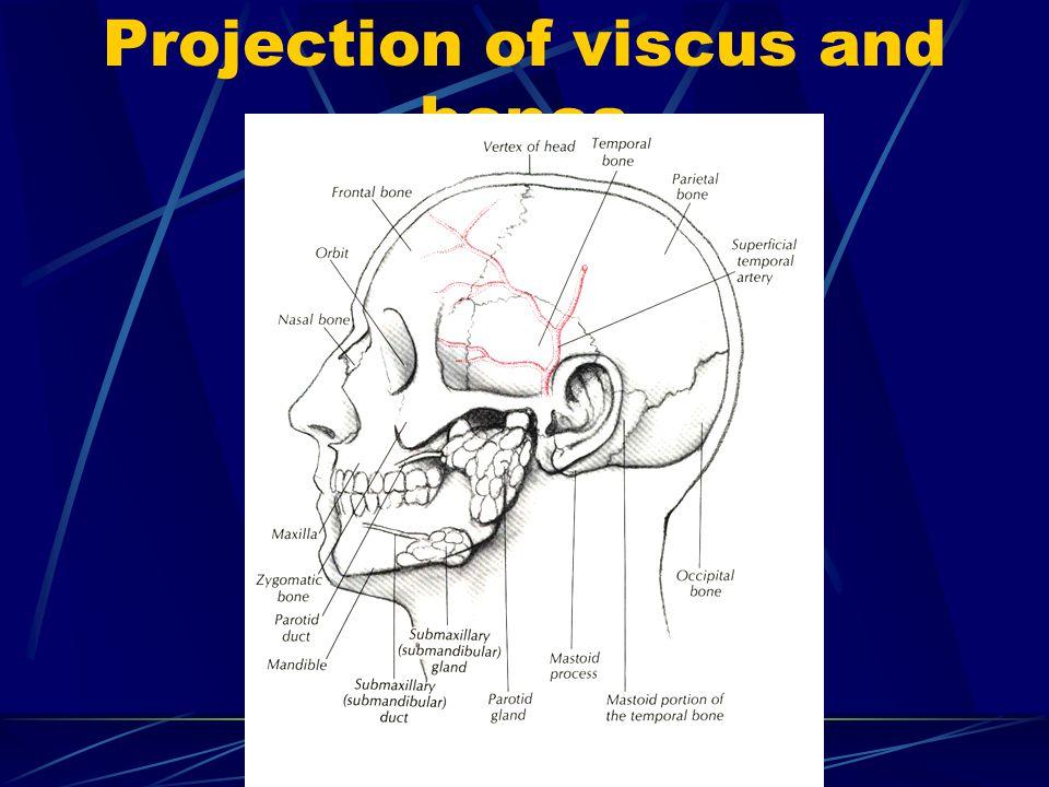 Clincal signs in cranio-cerebral trauma