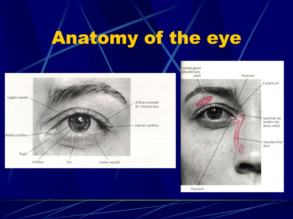 Motor nerves of the eye (abducens IV) Palsy of the great oblique muscle with impossibility to look below and outward Double vision depending on the position of the view