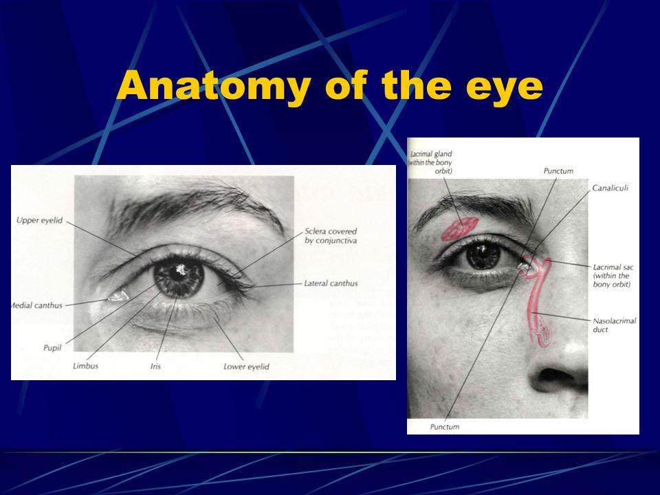 The pupilary reflex