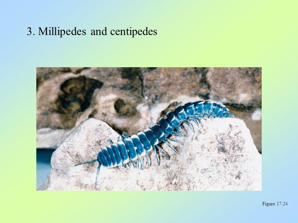 3. Millipedes and centipedes Figure 17.24