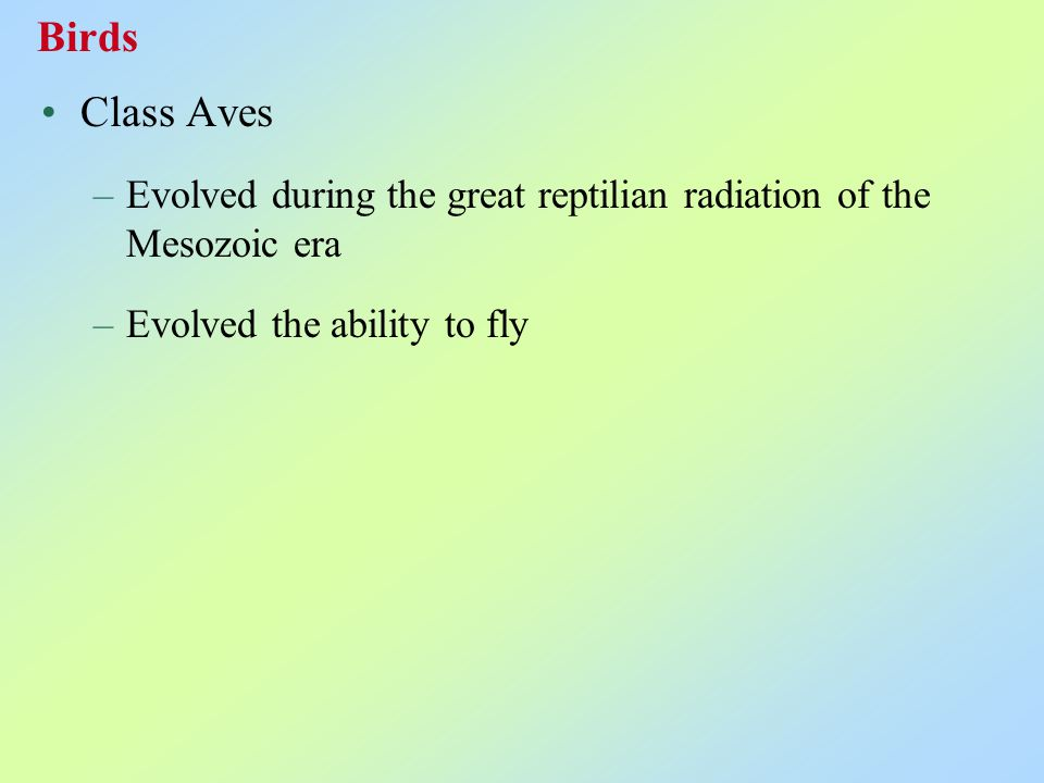Class Aves –Evolved during the great reptilian radiation of the Mesozoic era –Evolved the ability to fly Birds