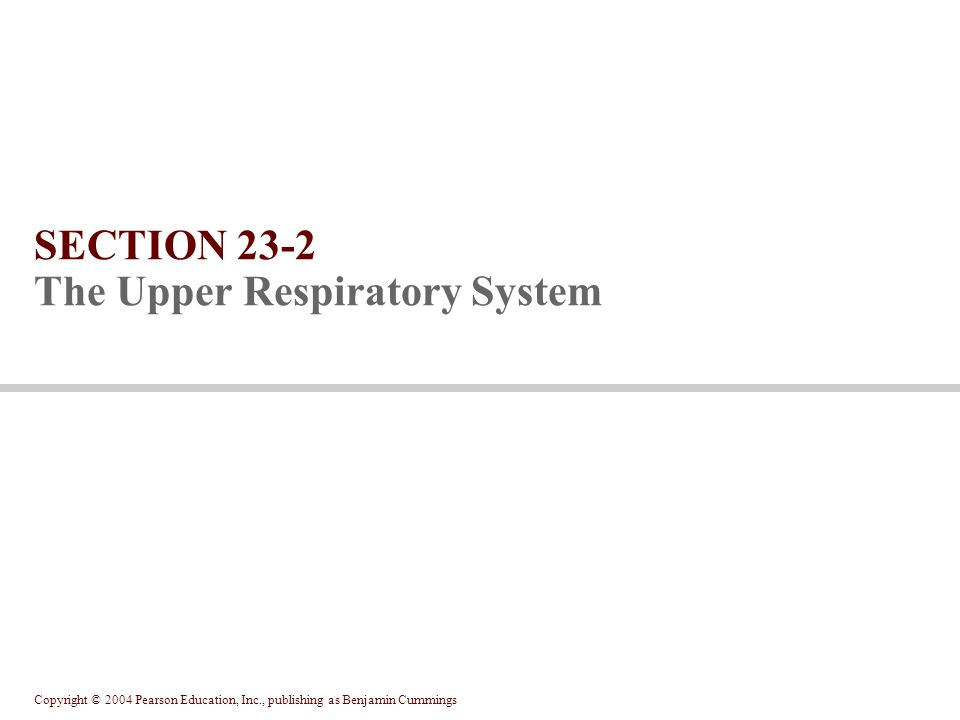 Copyright © 2004 Pearson Education, Inc., publishing as Benjamin Cummings SECTION 23-2 The Upper Respiratory System