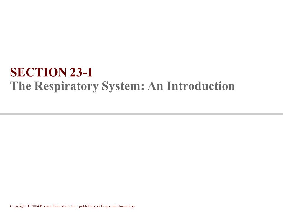 Copyright © 2004 Pearson Education, Inc., publishing as Benjamin Cummings SECTION 23-1 The Respiratory System: An Introduction