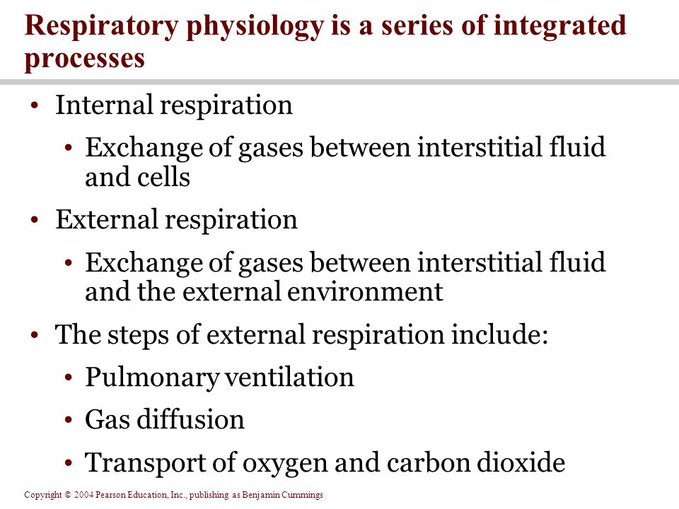 Copyright © 2004 Pearson Education, Inc., publishing as Benjamin Cummings Internal respiration Exchange of gases between interstitial fluid and cells