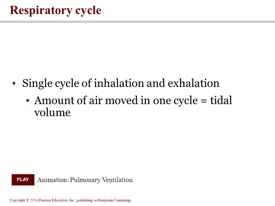 Copyright © 2004 Pearson Education, Inc., publishing as Benjamin Cummings Single cycle of inhalation and exhalation Amount of air moved in one cycle =