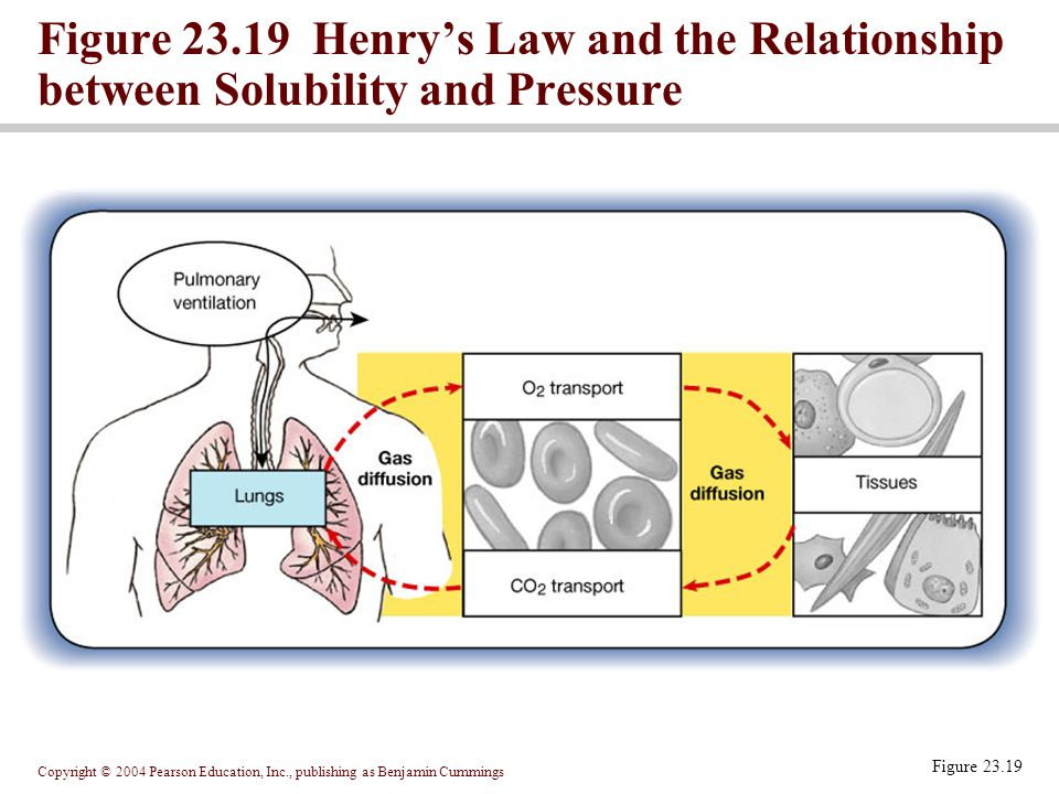 Copyright © 2004 Pearson Education, Inc., publishing as Benjamin Cummings Figure 23.19 Figure 23.19 Henry's Law and the Relationship between Solubilit