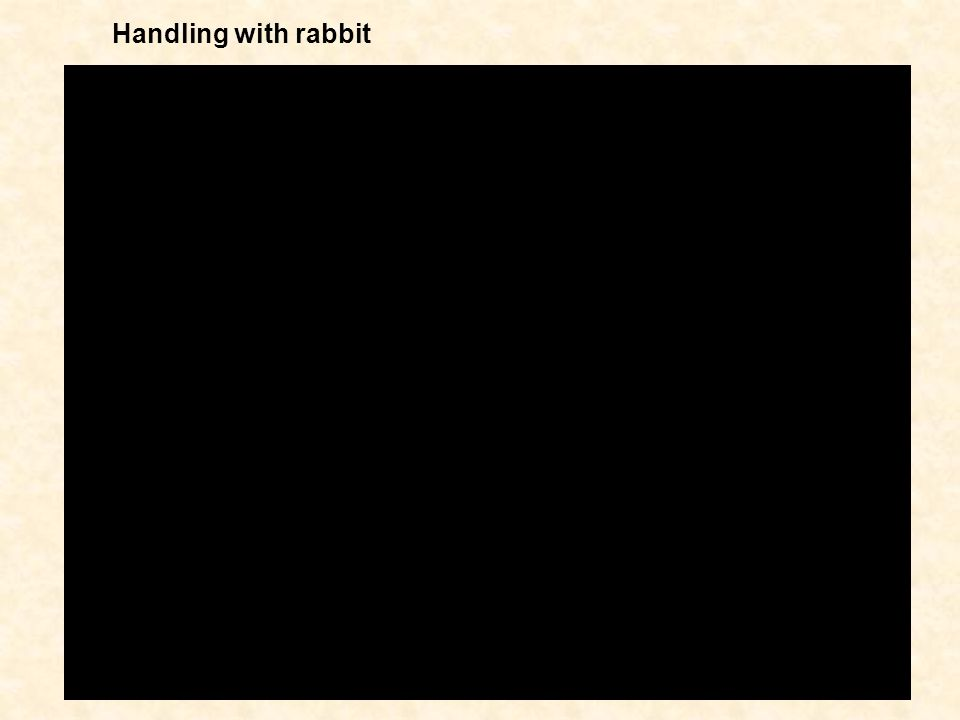 Handling with rabbit