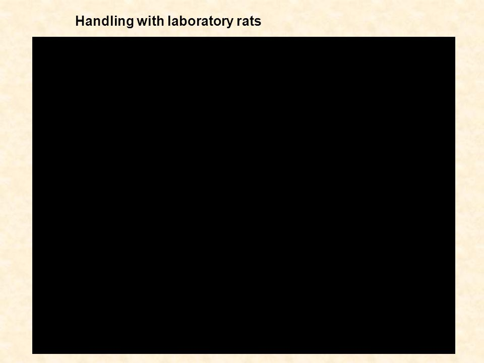 Handling with laboratory rats