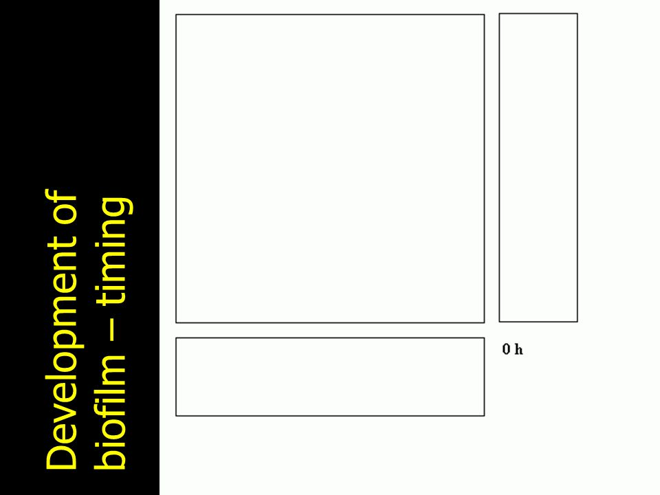 Development of biofilm – timing