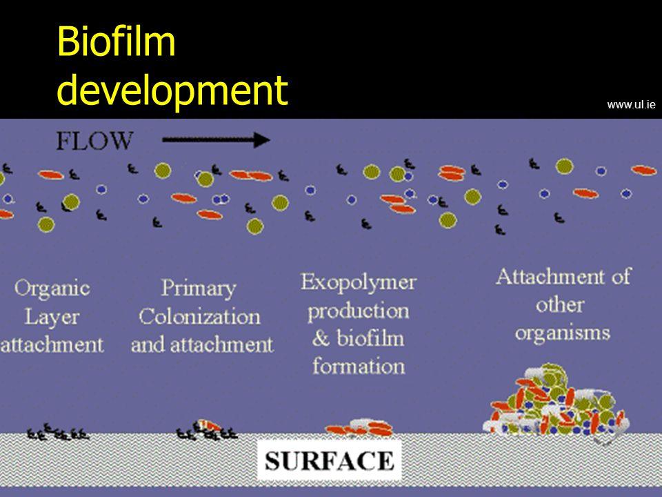Biofilm development www.ul.ie