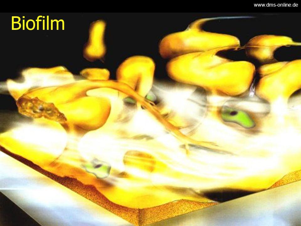 Biofilm www.dms-online.de