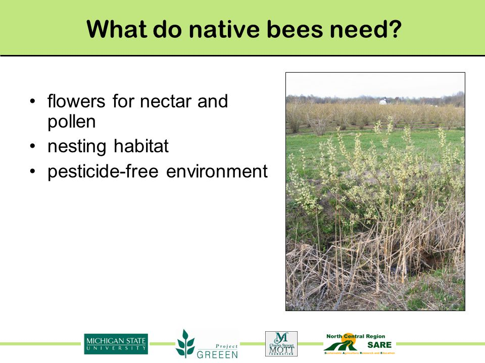 What do native bees need flowers for nectar and pollen nesting habitat pesticide-free environment