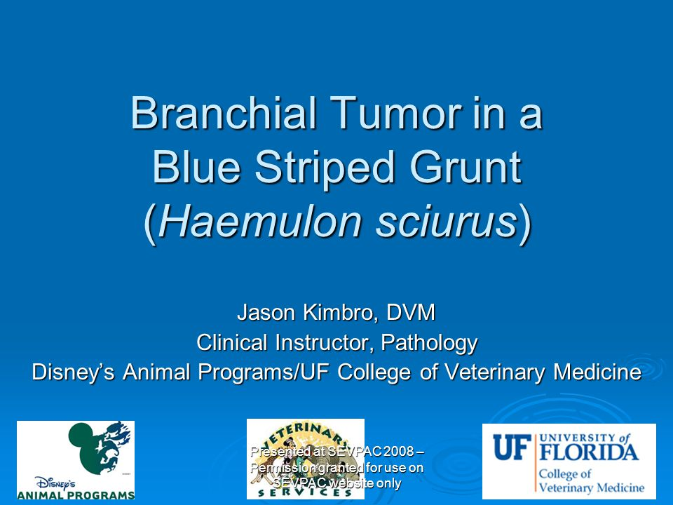 Branchial Tumor in a Blue Striped Grunt (Haemulon sciurus) Jason Kimbro, DVM Clinical Instructor, Pathology Disney's Animal Programs/UF College of Vet