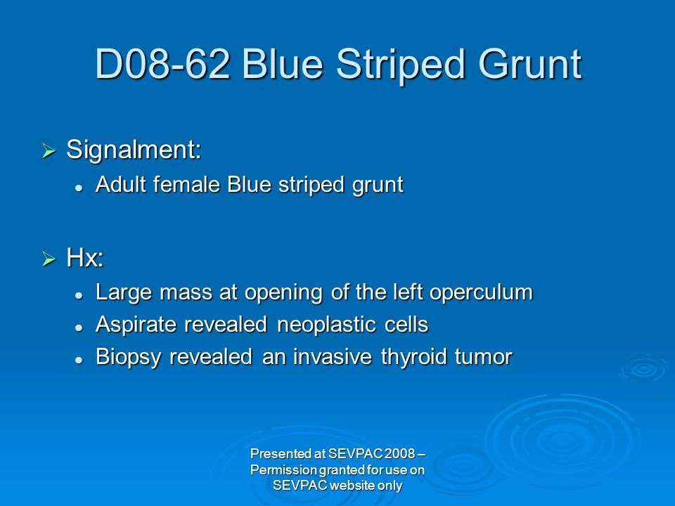  Signalment: Adult female Blue striped grunt Adult female Blue striped grunt  Hx: Large mass at opening of the left operculum Large mass at opening of the left operculum Aspirate revealed neoplastic cells Aspirate revealed neoplastic cells Biopsy revealed an invasive thyroid tumor Biopsy revealed an invasive thyroid tumor D08-62 Blue Striped Grunt Presented at SEVPAC 2008 – Permission granted for use on SEVPAC website only
