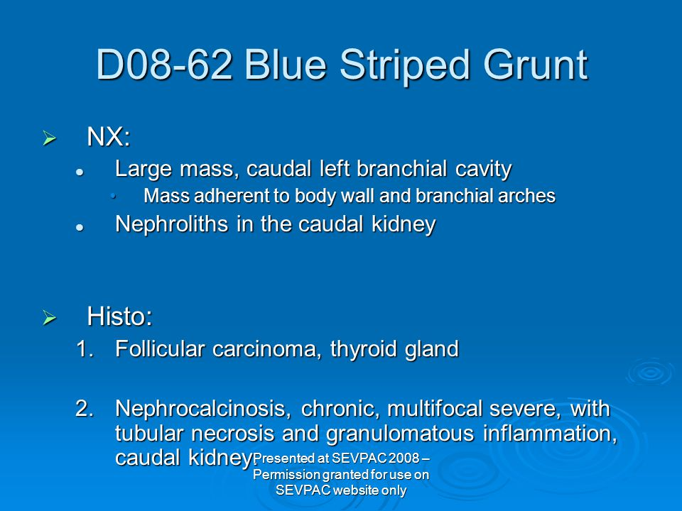 D08-62 Blue Striped Grunt  NX: Large mass, caudal left branchial cavity Large mass, caudal left branchial cavity Mass adherent to body wall and branc