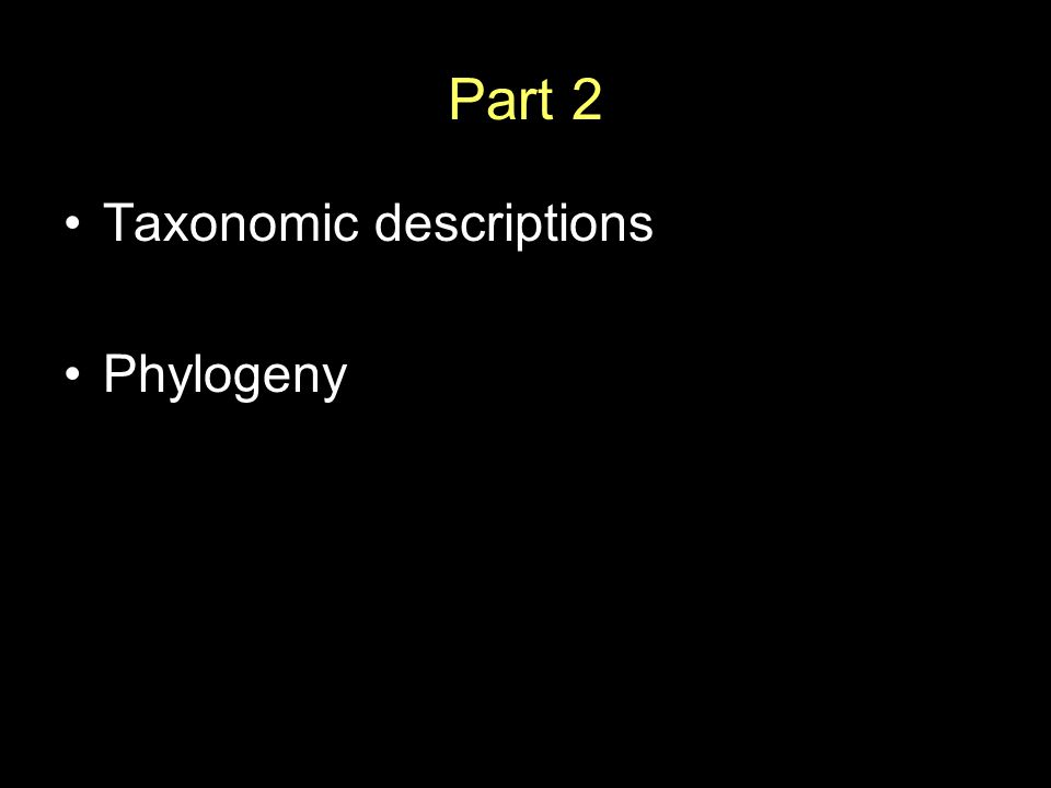 Part 2 Taxonomic descriptions Phylogeny