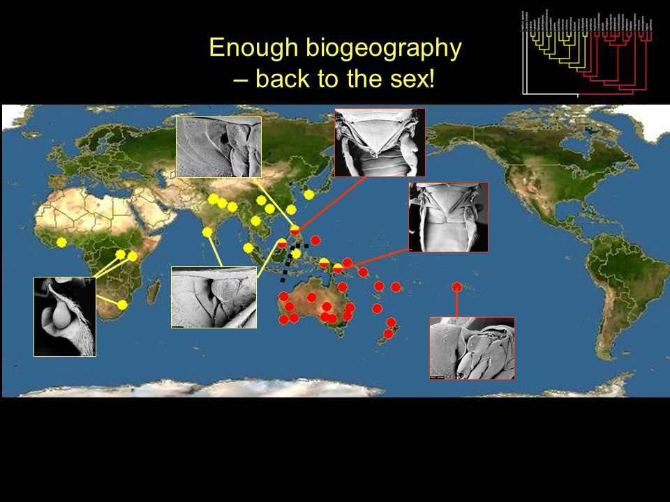 Enough biogeography – back to the sex!