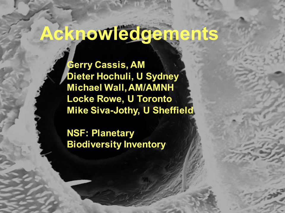 Acknowledgements Gerry Cassis, AM Dieter Hochuli, U Sydney Michael Wall, AM/AMNH Locke Rowe, U Toronto Mike Siva-Jothy, U Sheffield NSF: Planetary Biodiversity Inventory