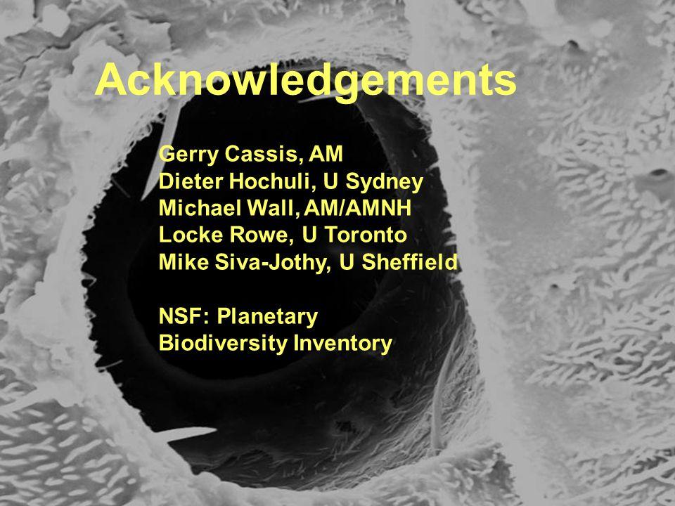 Acknowledgements Gerry Cassis, AM Dieter Hochuli, U Sydney Michael Wall, AM/AMNH Locke Rowe, U Toronto Mike Siva-Jothy, U Sheffield NSF: Planetary Bio