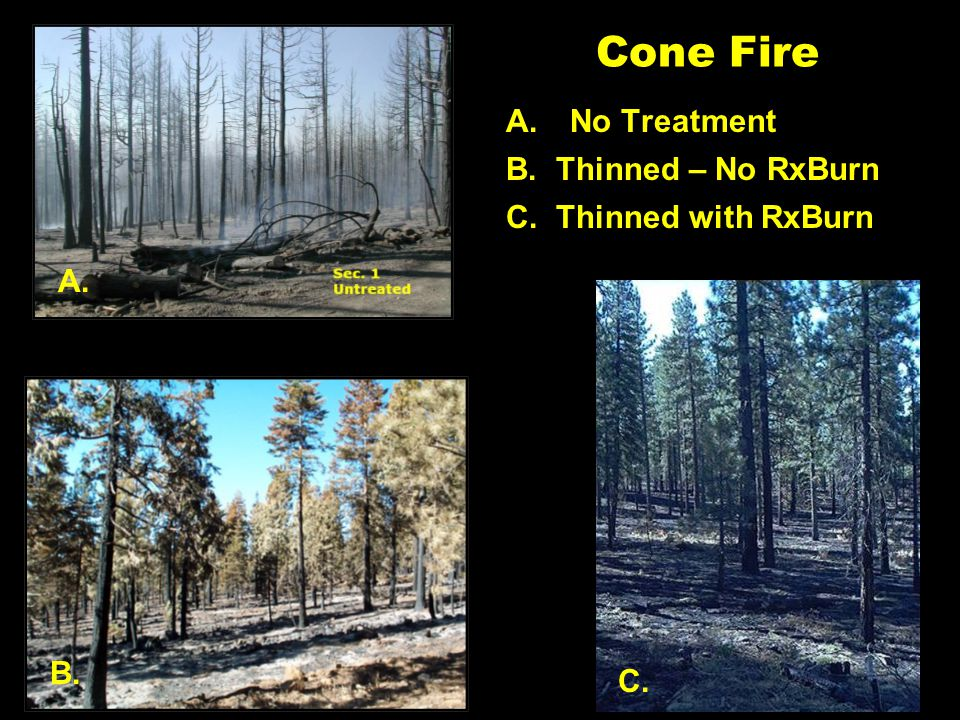 A. B. Thinned – No RxBurn B. Cone Fire A.No Treatment C. C. Thinned with RxBurn