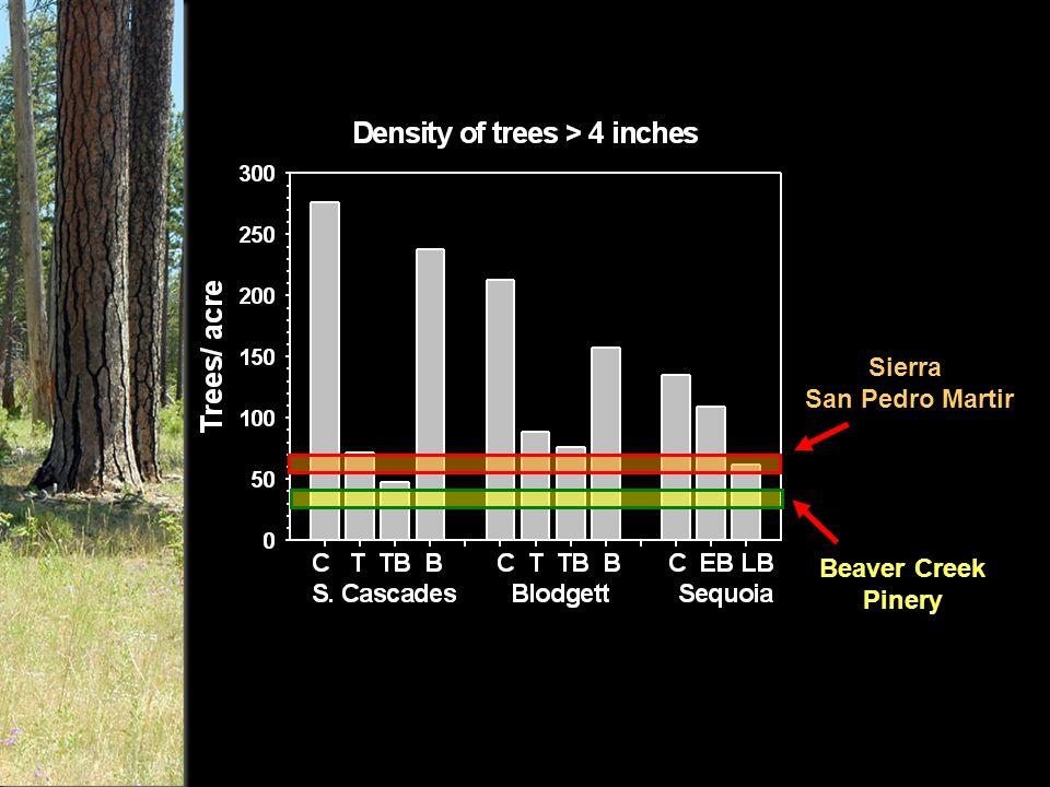 Sierra San Pedro Martir Beaver Creek Pinery