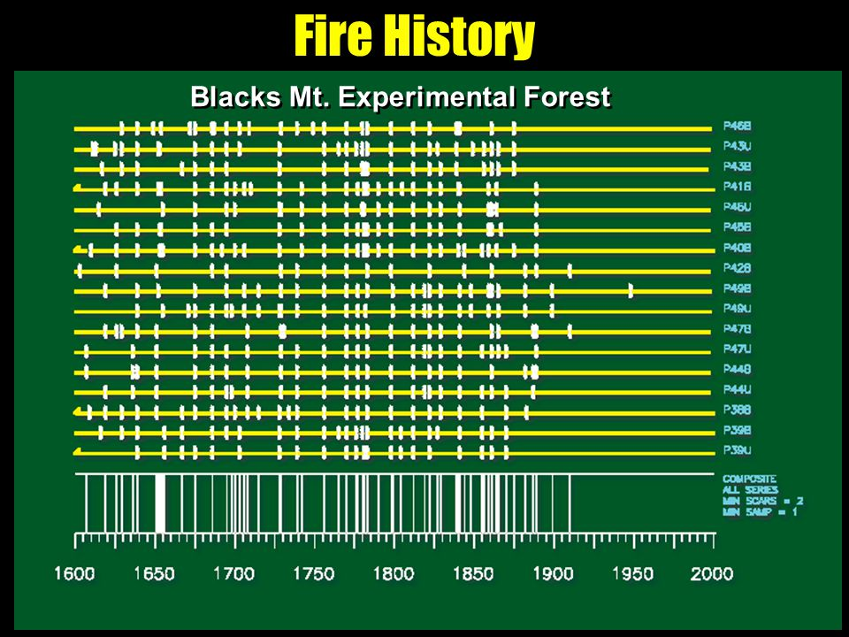 Fire History Blacks Mt. Experimental Forest