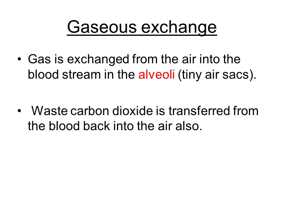 Gaseous exchange Gas is exchanged from the air into the blood stream in the alveoli (tiny air sacs). Waste carbon dioxide is transferred from the bloo