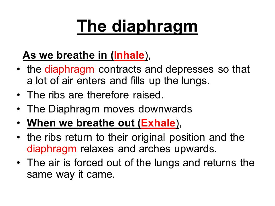 The diaphragm As we breathe in (Inhale), the diaphragm contracts and depresses so that a lot of air enters and fills up the lungs. The ribs are theref