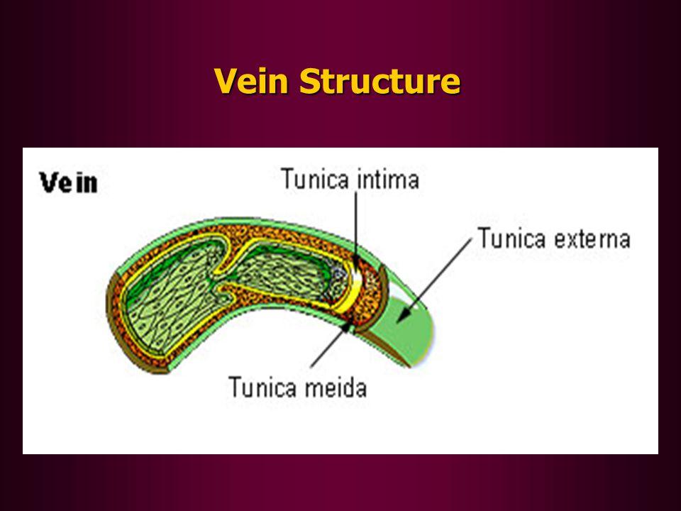 Vein Structure