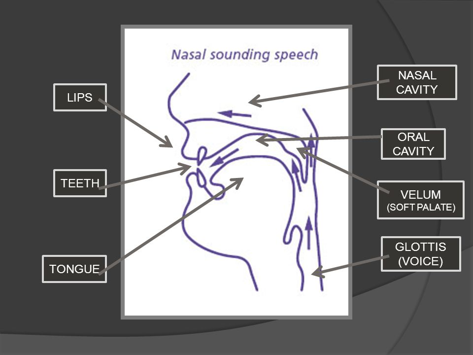 LIPS TEETH NASAL CAVITY TONGUE VELUM (SOFT PALATE) ORAL CAVITY GLOTTIS (VOICE)