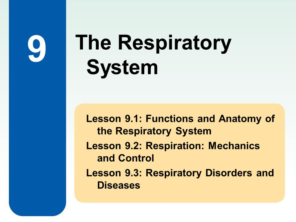 Lesson 9.1 Functions and Anatomy of the Respiratory System Chapter 9: The Respiratory System