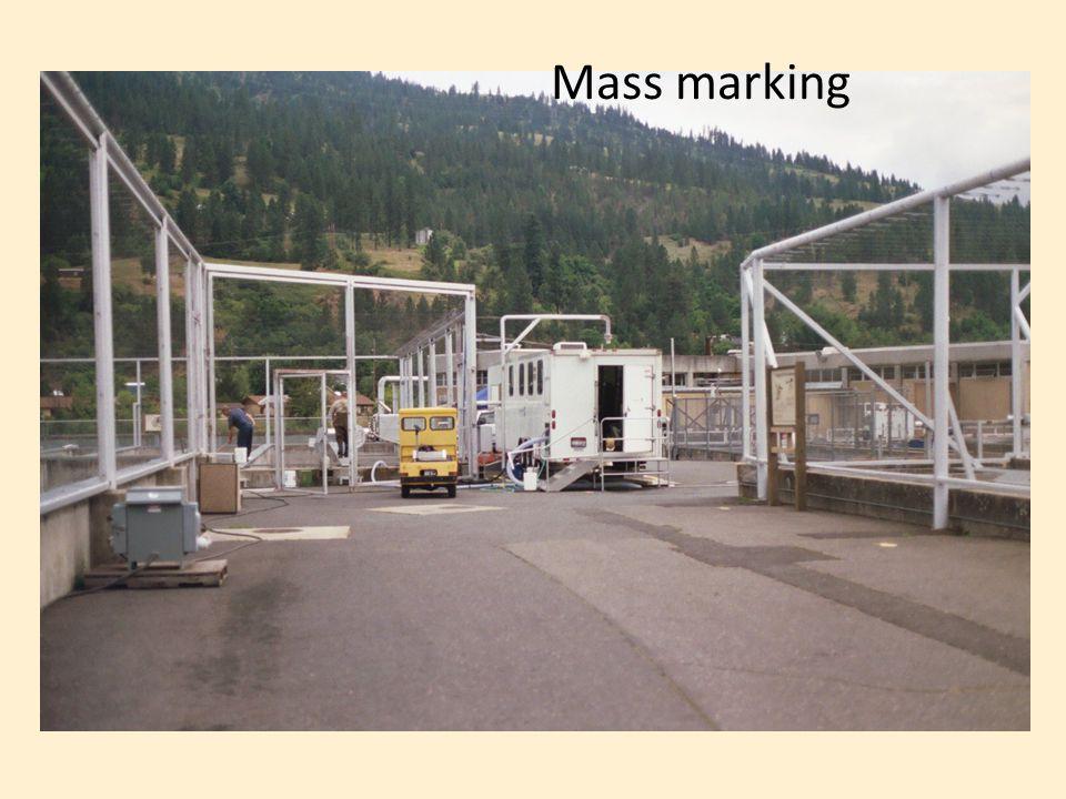 Mass marking