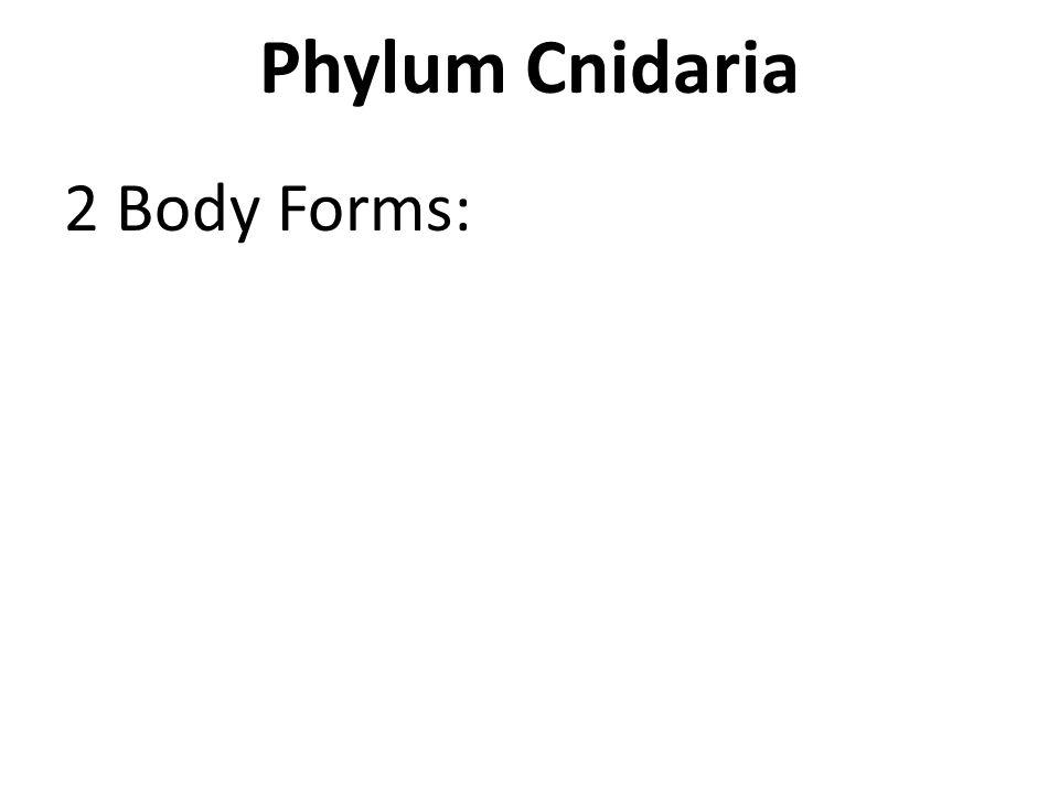 Phylum Cnidaria 2 Body Forms: