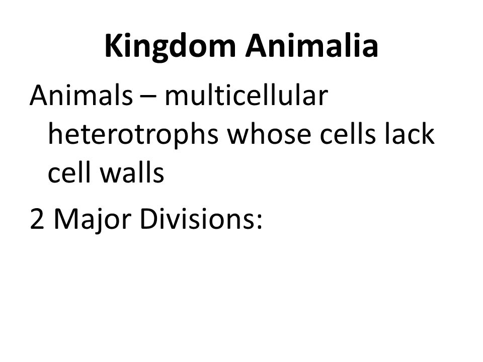 Kingdom Animalia Animals – multicellular heterotrophs whose cells lack cell walls 2 Major Divisions: