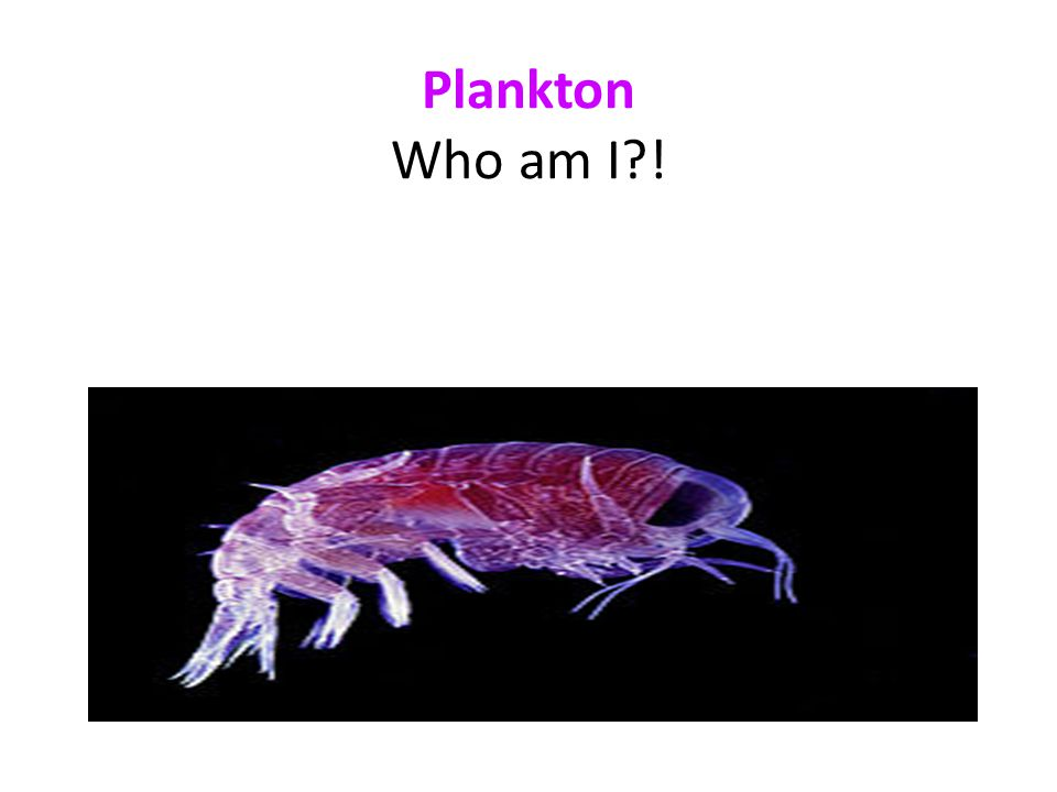 Plankton Who am I !