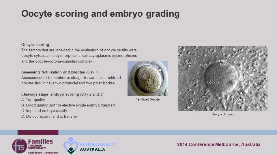 2014 Conference Melbourne, Australia Oocyte scoring and embryo grading Oocyte scoring The factors that are included in the evaluation of oocyte qualit