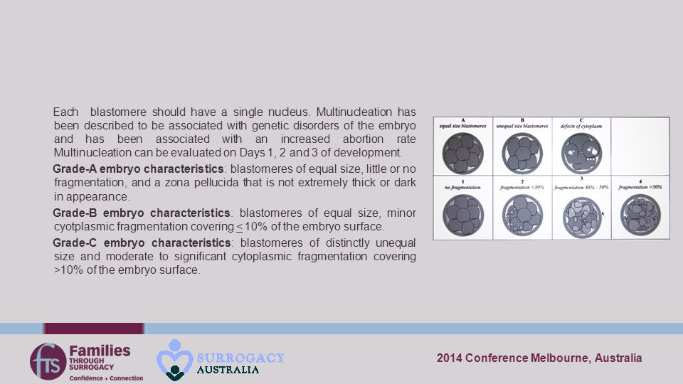 2014 Conference Melbourne, Australia Each blastomere should have a single nucleus. Multinucleation has been described to be associated with genetic di