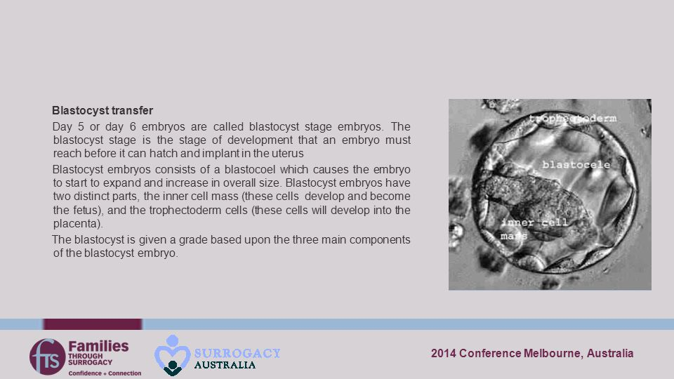 2014 Conference Melbourne, Australia Blastocyst transfer Day 5 or day 6 embryos are called blastocyst stage embryos. The blastocyst stage is the stage